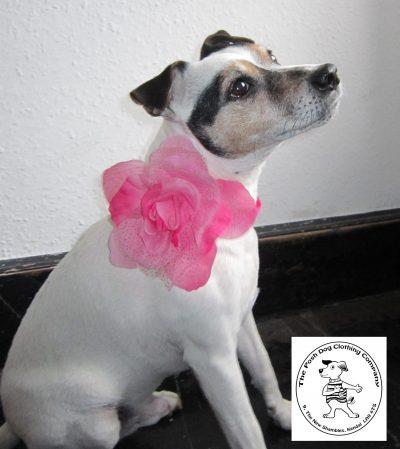 the posh dog clothing company corsage 2