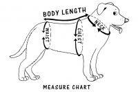measure body